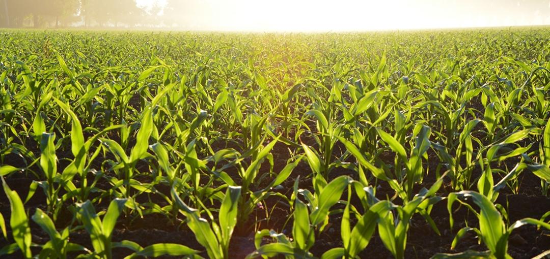 Devenir acteur d'une nouvelle agriculture, plus verte, utilisant du phosphore issu des eaux usées
