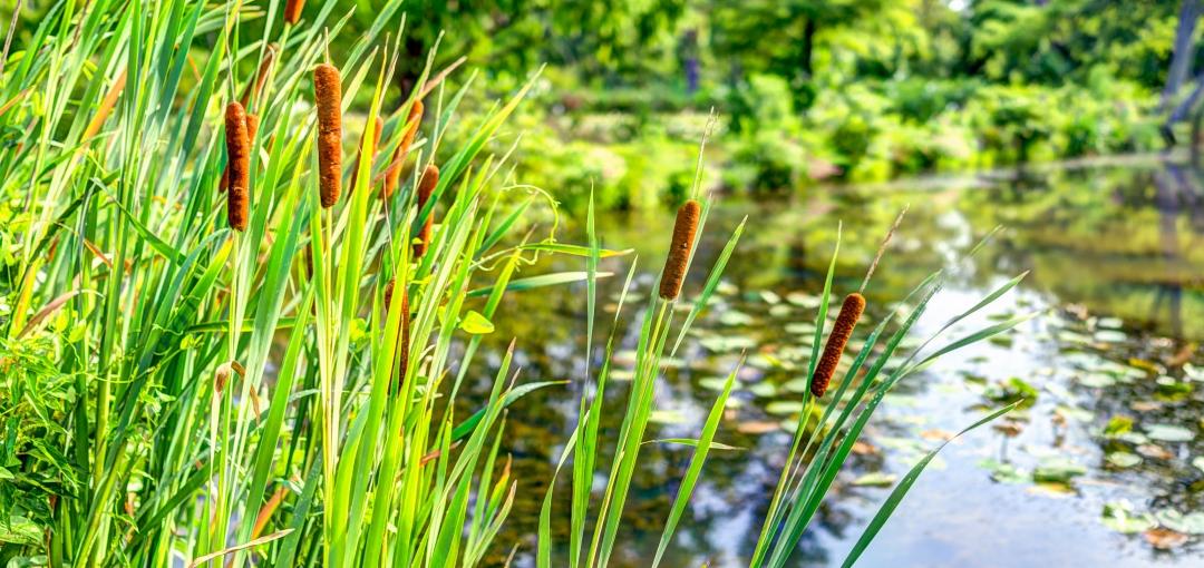Les zones de rejet végétalisées : des services rendus par la nature
